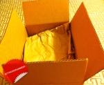 mattyectogogglesbox